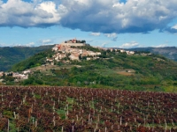 WINE ROADS OF ISTRIA